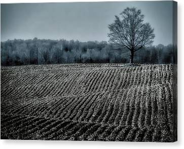 Farmfield Furrows Canvas Print