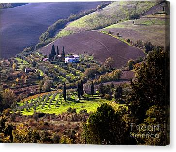 Farmhouses Among Tuscan Fields Canvas Print by Tim Holt