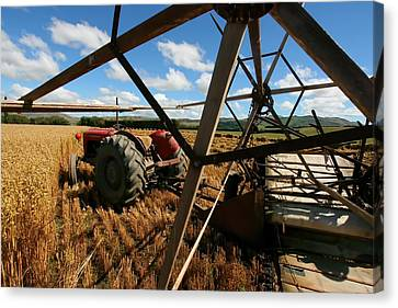 Farming In New Zealand Canvas Print by Amanda Stadther