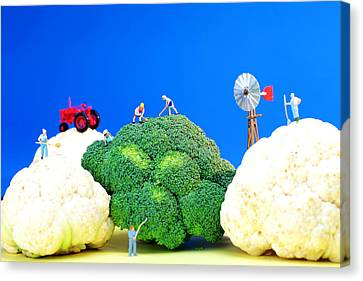 Farming On Broccoli And Cauliflower Canvas Print by Paul Ge