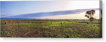 Farms At Sunset, Vale, Butte County Canvas Print by Panoramic Images