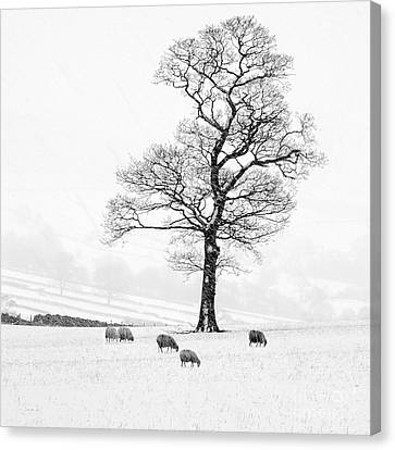 Farndale Winter Canvas Print by Janet Burdon