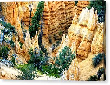 Faryland Canyon Bryce Canyon National Monument Canvas Print