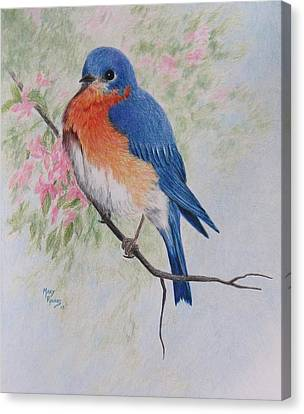 Fat And Fluffy Bluebird Canvas Print by Mary Rogers