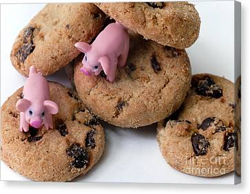 Chocolate Canvas Print - Fat Pigs 2 by Amy Cicconi
