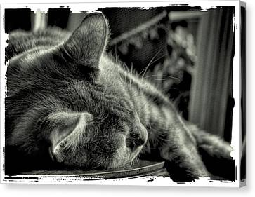 Fatigued Feline Canvas Print by David Patterson