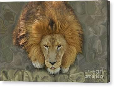 Faux Lion Canvas Print by Josephine Cohn