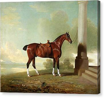 Favorite Chestnut Hunter Of Lady Frances Stephens  Nee Lady Frances Pierrepont  Canvas Print by Benjamin Marshall