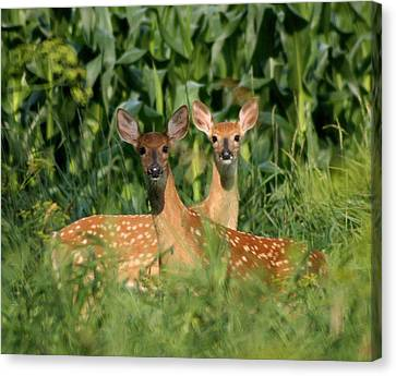 Fawns Crossed Canvas Print