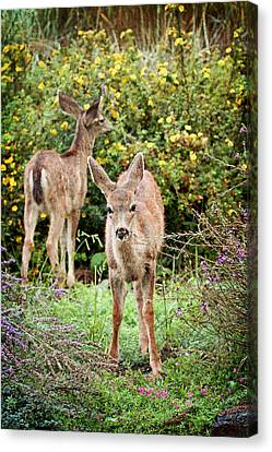 Canvas Print featuring the photograph Fawns Eating Flowers by Peggy Collins