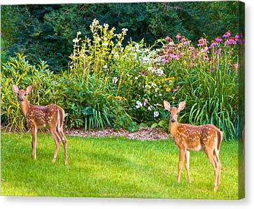 Fawns In The Afternoon Sun Canvas Print