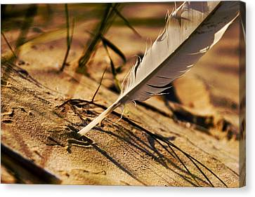 Feather And Sand Canvas Print by Raimond Klavins