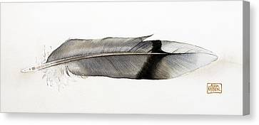 Feather Canvas Print by Ann Miller