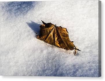 Feather Bed Of Snow Canvas Print by Alexander Senin