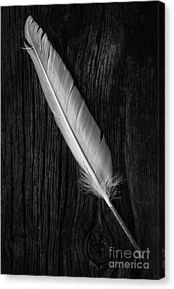 Farming Barns Canvas Print - Feather by Edward Fielding