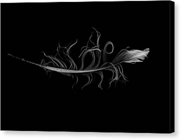 feather II Canvas Print