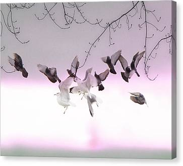Feather Light Canvas Print by Gothicrow Images