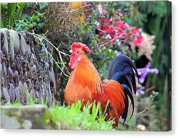 feathered alarm II Canvas Print