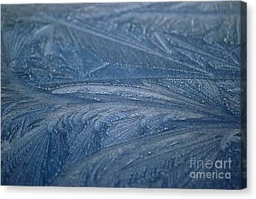 Feathered Blue Canvas Print