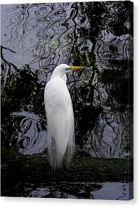 Feathered Fantasy Canvas Print