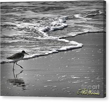 Feathered Friend At The Beach Canvas Print by Phil Mancuso