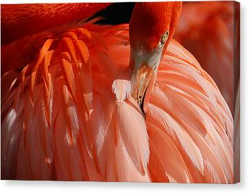 Canvas Print featuring the photograph Feathered by Lorenzo Cassina