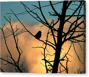 Feathered Silhouette Canvas Print
