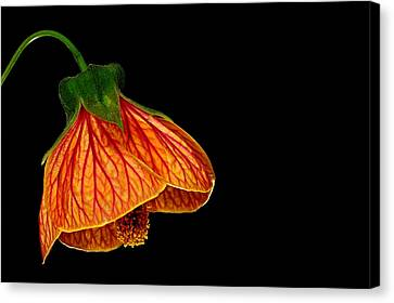 Features Of A Flower Canvas Print by Marwan Khoury