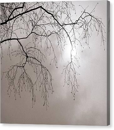 February Sun - Featured 3 Canvas Print by Alexander Senin