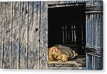 Canvas Print featuring the photograph Feed Sack In Loft by Greg Jackson