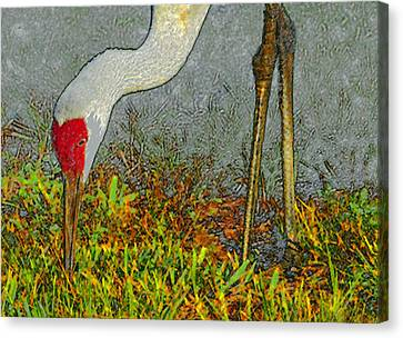 Feeding Crane Canvas Print