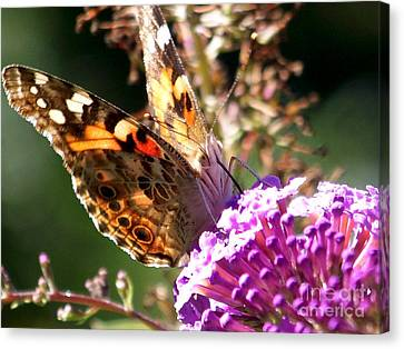 Feeding Canvas Print