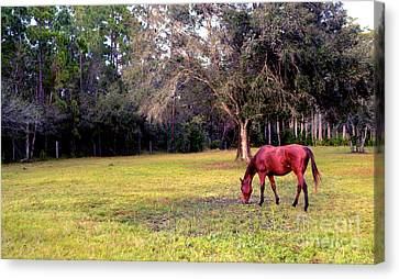 Feeding In The Pasture Canvas Print by Jon Neidert