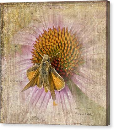 Feeding Moth Canvas Print