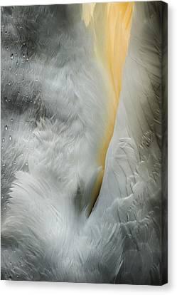 Feeding Swan Canvas Print by Andy Astbury