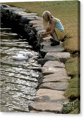 Canvas Print featuring the photograph Feeding The Ducks by ELDavis Photography