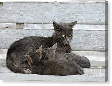 Benches Canvas Print - Feeding The Kittens by George Atsametakis
