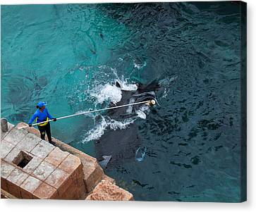 Feeding The Sting Rays Canvas Print by Susan Stone