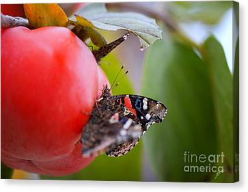 Canvas Print featuring the photograph Feeding Time by Erika Weber