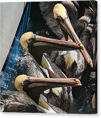 Feeding Time Canvas Print by Oscar Alvarez Jr
