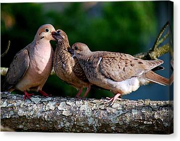 Feeding Twin Mourning Doves Canvas Print by Mary Beth Landis