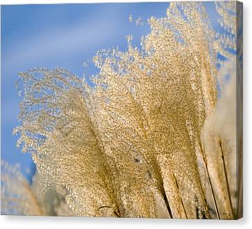 Canvas Print featuring the photograph Feel The Breeze by Robert Culver