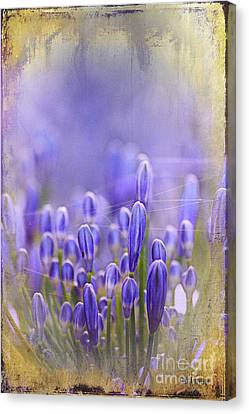 Canvas Print featuring the photograph Feelin' Blue ... by Chris Armytage