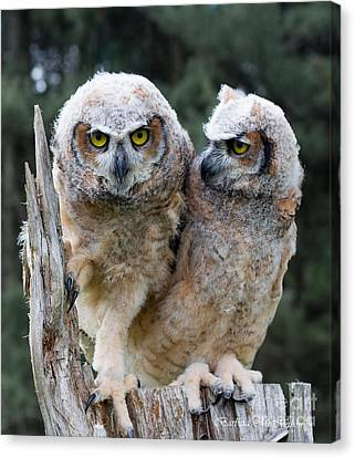 Feeling A Little Grumpy Are We? Canvas Print by Barbara McMahon
