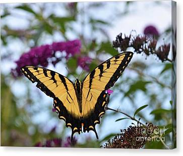 Canvas Print featuring the photograph Feeling Pretty II by Judy Wolinsky