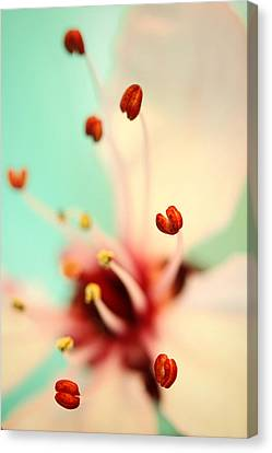 Canvas Print featuring the photograph Feeling Spring by Sharon Johnstone