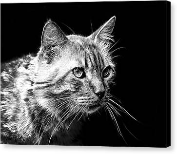 Feline Canvas Print by Camille Lopez