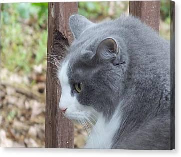 Felix The Cat 1 Canvas Print