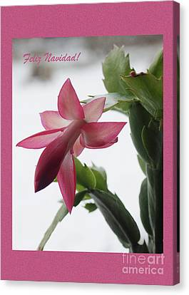 Canvas Print - Feliz Navidad Pink Christmas Cactus Photo Greeting Card  by Andrew Govan Dantzler