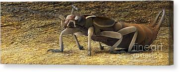Zoolog Canvas Print - Femal Adult Earwig, Sem by Power and Syred
